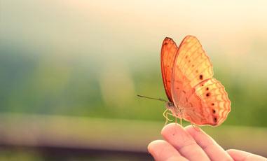 grid-butterfly